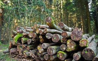 gekapt hout stam in bos in de natuur foto