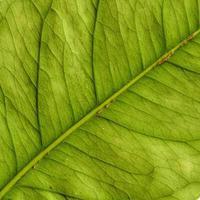 patroon van natuurlijke plantenbladeren foto
