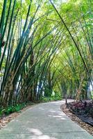 loopbrug met bamboetuin in park foto