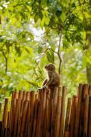 aap kijkt omhoog op het hek foto