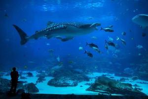 vissen in aquarium foto