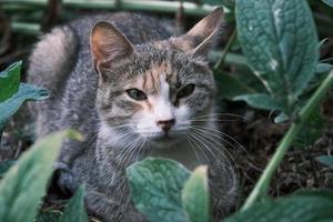 schattige straatkat zittend op het gras in de zomertuin foto