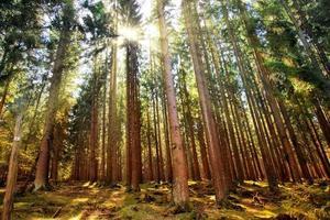 bomen in de natuur in park foto