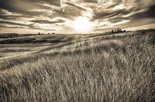 magische tarwevelden in Palouse Washington foto