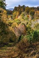 pittoresk herfstlandschap in West-Virginia foto
