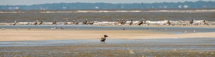 abstracte pelikanen tijdens de vlucht op het strand van de Atlantische Oceaan foto