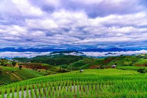 rijstterrasvelden bij pa bong piang village chiang mai, thailand. foto