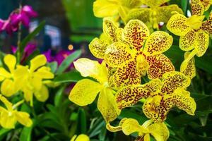 geel met rode vlekken orchidee foto