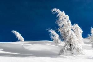 geïsoleerde bomen bedekt met sneeuw foto
