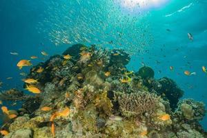 koraalrif en waterplanten in de rode zee, eilat israël foto