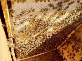 honingraat van bijenkorf gevuld met gouden honing foto