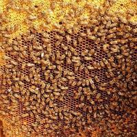 achtergrond zeshoek textuur, wax honingraat van een bijenkorf foto