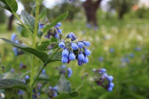 een tak van blauwe bloemen op een achtergrond foto