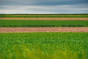 een mooie foto van een kleurrijk veld bij daglicht