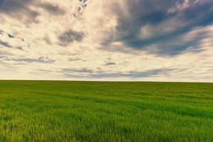 foto van prachtig land van groene tarwe boven dramatische warme lucht