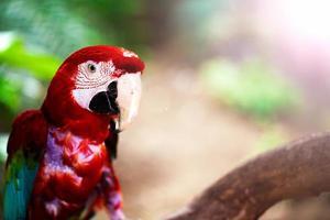 zoet dier vogel kleurrijke exotische tropische papegaai foto