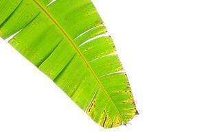 bananenblad geïsoleerd op een witte achtergrond foto