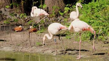 een groep roze flamingo's foto