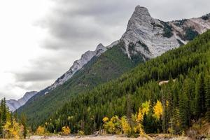 wasootch kreek. Bow Valley-wildernisgebied, Alberta, Canada foto