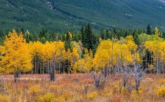provinciaal park bow valley alberta canada foto