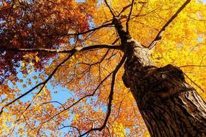 gele bladeren en takken in de herfst foto