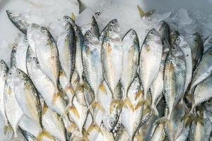 verse makreel op de markt in thailand foto