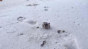 schattige heremietkreeft draagt een prachtige schelp die op het zandstrand van het tropische eiland kruipt. een land coenobita perlatus gebruikt de lege schaal als mobiel veiligheidshuis. zomervakantie concept foto