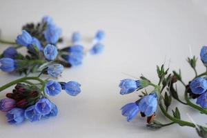 takken van blauwe bloemen op een witte achtergrond foto