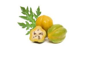 berg papaya vasconcellea cundinamarcensis op witte achtergrond foto