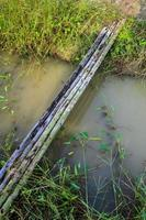 stammen eucalyptus geplaatst voor tijdelijke brug foto