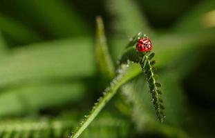 bug op bladeren met kopieerruimte foto