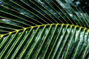 groene palmbladeren patroon achtergrond. abstracte kokospalmen. foto