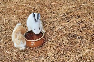 konijn zit op hooibergen of droog gras foto