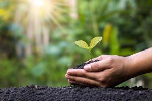 boeren planten gewassen met de hand op de grond en in het zachte zonlicht, ideeën voor de ontwikkeling van landbouw en herbebossing om de opwarming van de aarde te verminderen. foto