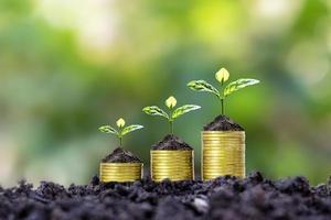 planten worden geplant op muntstapels voor financiën en bankieren, ideeën om geld te besparen en te investeren in financiële zaken. foto