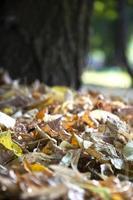 droge herfstbladeren onscherp foto