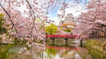 himeji-kasteel met sakura-kersenbloesemseizoen foto