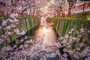 kersenbloesem bij meguro-kanaal in tokyo, japan foto