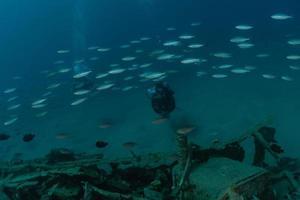 vissen zwemmen in de rode zee, kleurrijke vissen, eilat israel foto