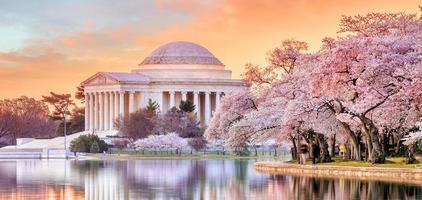 Jefferson Memorial tijdens het Cherry Blossom Festival foto