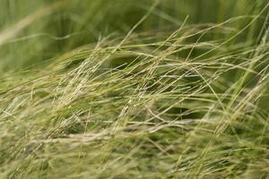 close-up van groen gras op het veld foto