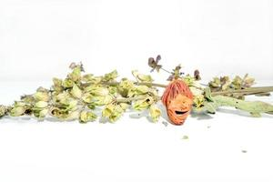 perzikpit met gedroogde salietakjes foto