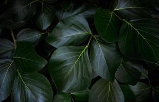groene bladeren patroon achtergrond foto