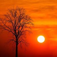 silhouet dode boom bij zonsondergang foto
