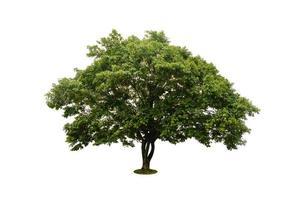 mooie groene boom geïsoleerd op wit met uitknippad foto