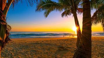 silhouet kokospalmen op het strand bij zonsondergang foto