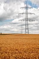 landbouw plant spike veld in de natuur foto
