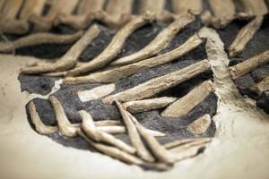oude prehistorische dinosaurusskelet fossiel foto