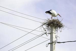 ooievaar in een nest bovenop een pilaar foto