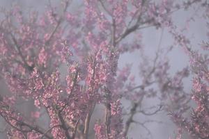 roze achtergrond bestaande uit bloemen foto